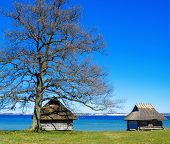 Spring Landscape With A Greater Oak At The Sea
