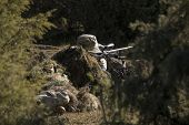 picture of sniper  - Sniper with ghillie waiting for target in an Airsoft party - JPG