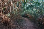 Cane And Footpath