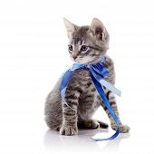 Gray Kitten With A Tape.