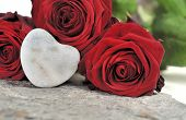 Love And Roses