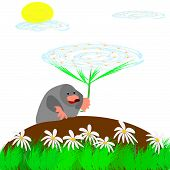 picture of mole  - Mole on the field with daisies collect flowers - JPG