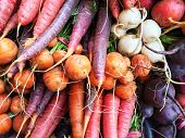 stock photo of turnips  - Colorful root vegetables - JPG