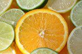 Orange Slice Among Citrus Fruit