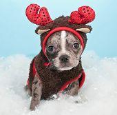 Christmas Reindeer Puppy
