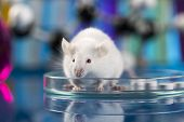 image of blue animal  - Workplace modern laboratory for molecular biology test on blue background - JPG