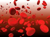 Blood. Many red erythrocytes, floating on an artery