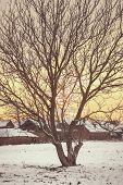 Photo Of Empty Walnut Tree With Bare Crown In Winter
