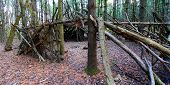 stock photo of primitive  - Primitive log shelter built in a pine forest of northern Illinois - JPG