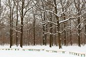Snow Covered Benches And Trees In City Park