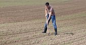 picture of weed  - Young farmer hoeing weeds in corn field in spring - JPG