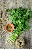image of cilantro  - Bunch fresh cilantro and coriander seeds on a wooden table - JPG