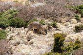 stock photo of plateau  - Roe deer in a bush in Yeongsil plateau - JPG