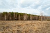 stock photo of dry grass  - Russia - JPG