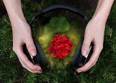image of geranium  - red geranium listening to music from headphones - JPG