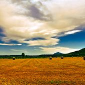 stock photo of hay bale  - Landscape with Many Hay Bales and Vineyard Vintage Style Toned Picture - JPG
