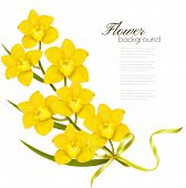 stock photo of yellow orchid  - Holiday yellow flowers background - JPG