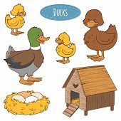 picture of duck  - Set of cute farm animals and objects vector family duck coloring book - JPG