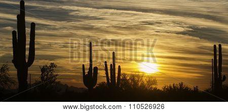 Arizona desert landscape, Phoenix,Scottsdale area.