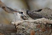 Babyhummingbirdinnest