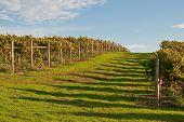 Road Through Autumn Vineyard