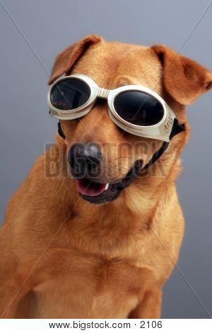 Doggie Goggles poster
