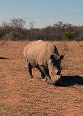Rhino Road 2