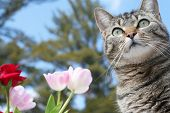 Hermoso gato gris entre las flores