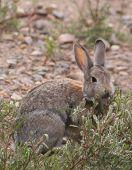 Best Wild Rabbit