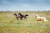 Horses Of Kazakhstan