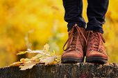 Brown Female Shoes On A Stump, Wanting Foliage. Autumn Concept poster