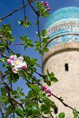 die Obstbaum Blüten auf dem Hintergrund der Chor minor Minaret in Buhara