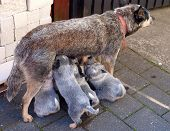 dog nursing