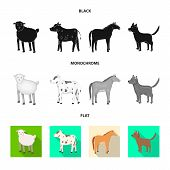 Vector Design Of Breeding And Kitchen Symbol. Collection Of Breeding And Organic Stock Symbol For We poster