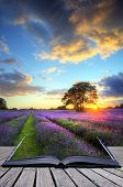 Creative Concept Image Of  Atmospheric Sunset  Lavender Fields In Pages Of Magic Book