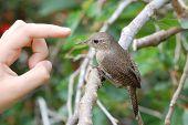 Hand und Vögelchen