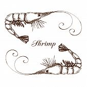 Hand Drawn Engraved Ink Shrimp Or Prawn Illustration Isolated On White. Etched Seafood Graphic.outli poster