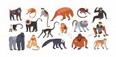Collection Of Cute Funny Exotic Monkeys And Apes Isolated On White Background. Set Of Adorable Tropi poster