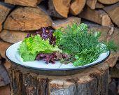 Fresh Lettuce Leaves, Close Up.fresh Lettuce Leaves, Close Up.fresh Lettuce Leaves On An Enamel Plat poster