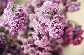 Faded Bouquet Of Lilac. The Magic Of Lilac Flowers With Five Petals, Close-up poster