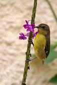 Bird Clinging To A Flower Monteverde