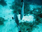 Two grouper