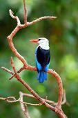Safari Bird