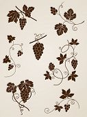 stock photo of grape-vine  - vector decorative grape vine elements for design - JPG