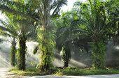 Palm Day Outdoor Fog Light Farm