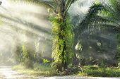 Palm Light Day Outdoor Fog Farm