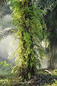 Palm Outdoor Fog Light Farm Day