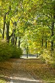 stock photo of bonnes  - Rheinaue a leisure park in autumn on the banks of the Rhine in Bonn Germany - JPG
