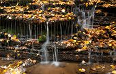 Falling Water Between Autumn Leaves