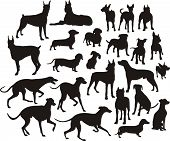 image of bull-mastiff  - the set of silhouette of different dogs - JPG